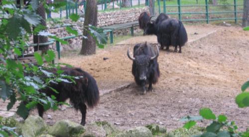 turystyka-atrakcje , ogrody zoologiczne w Polsce, zo w Gdańsku Oliwie